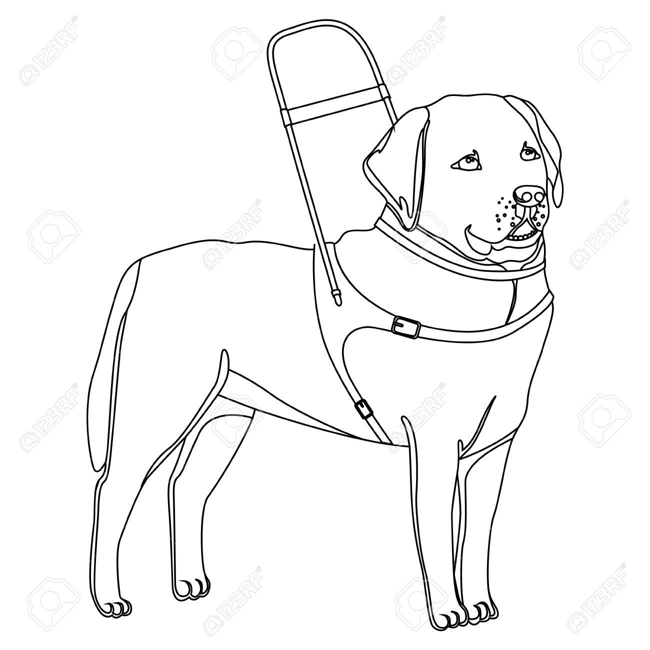 Ilustración De Vector De Contorno De Perro Guía Labrador Retriever