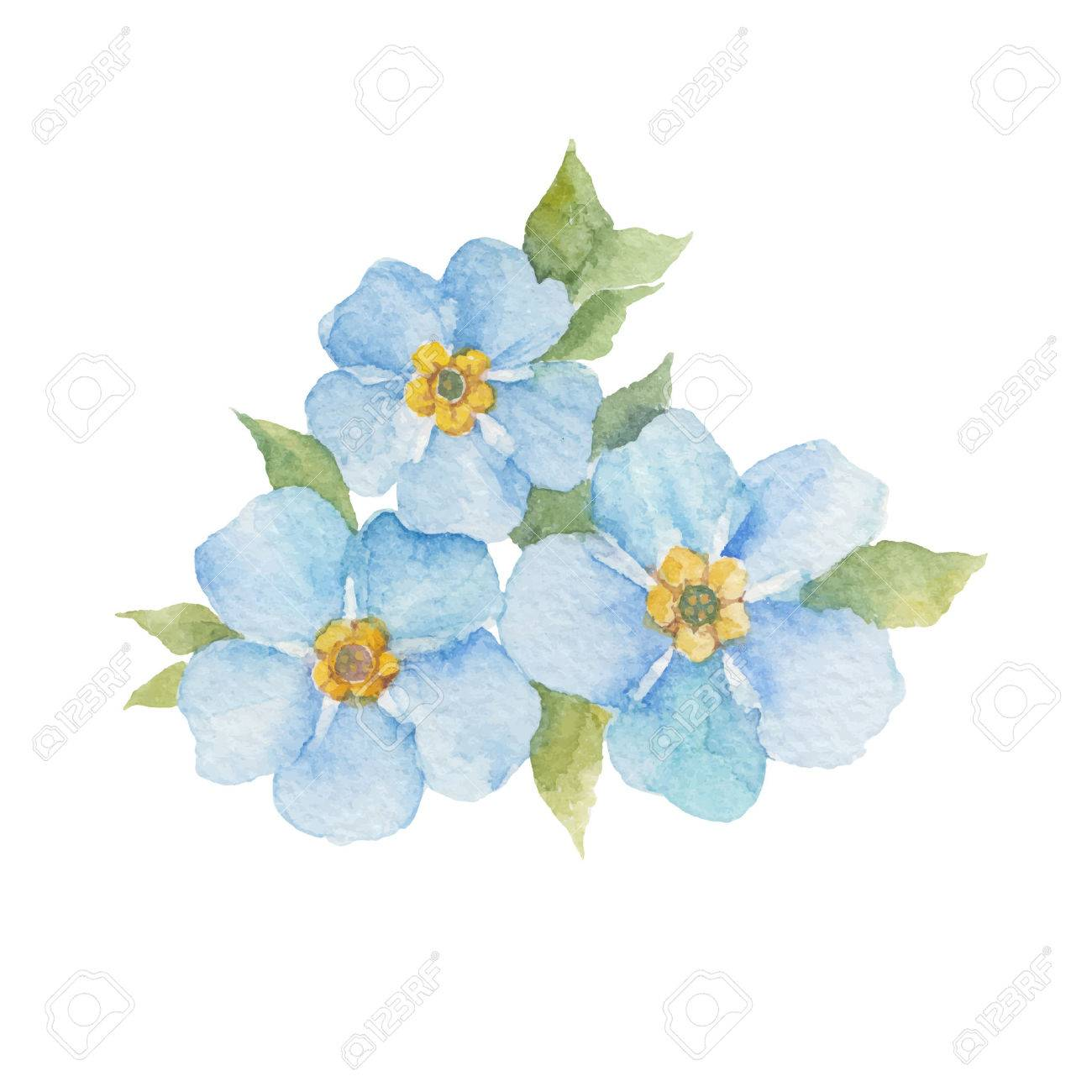 Forget Me Not Flowers Isolated On White Background Watercolor
