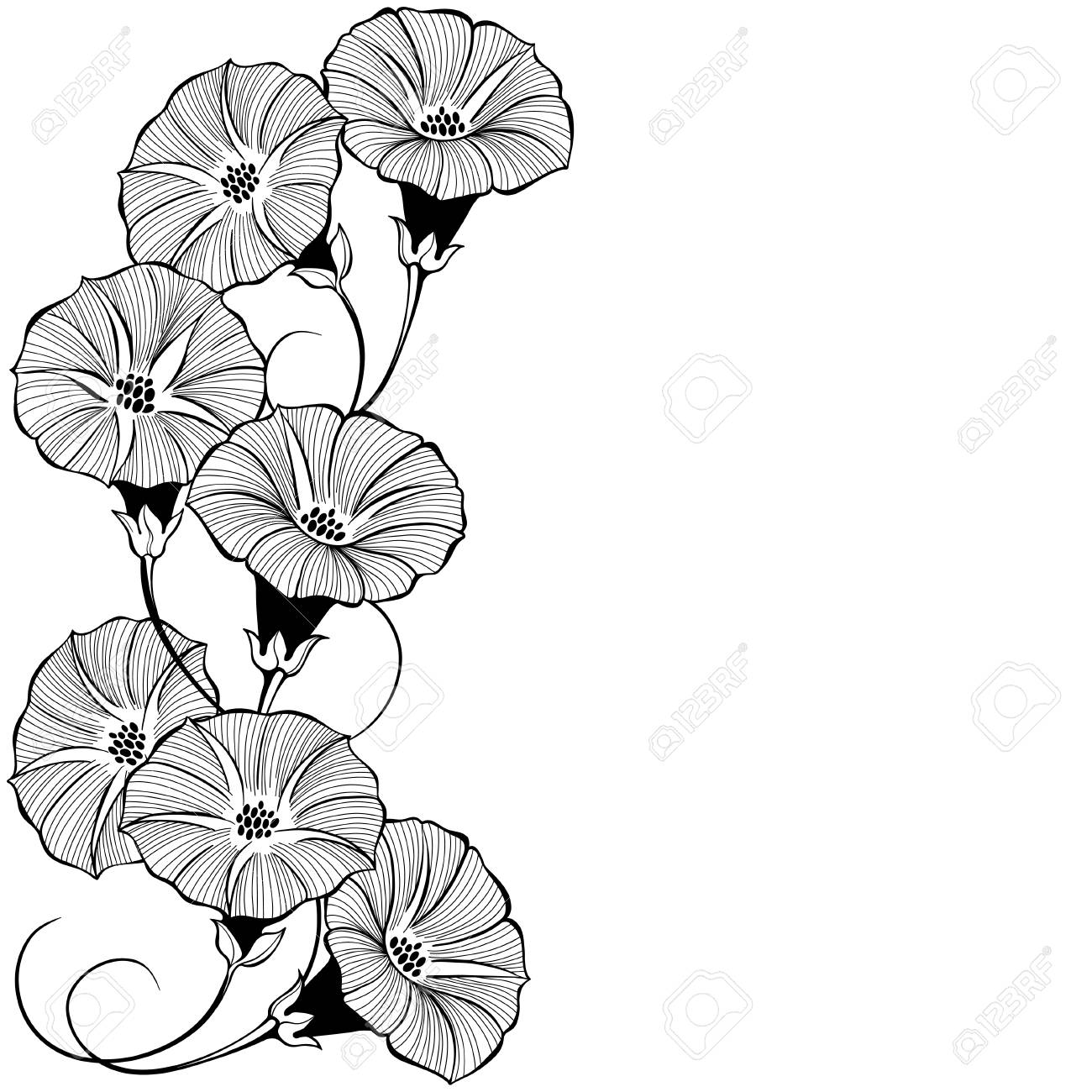 Floral design with bindweed on a white background. Vector illustration with place for text. Greeting card, invitation or isolated elements for design.Vertical composition. - 104363126