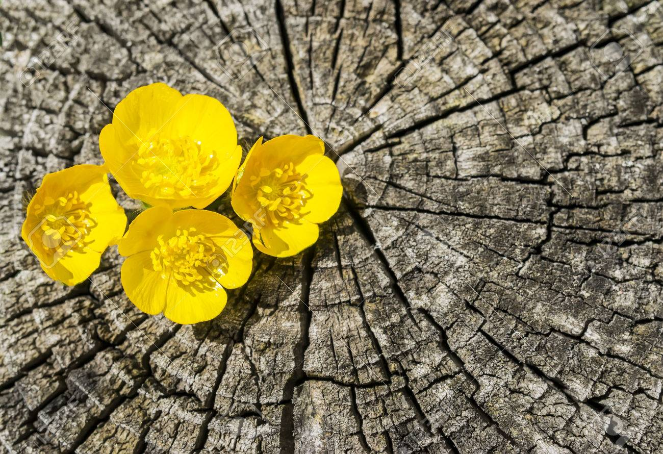 Four Tiny Yellow Flowers Between The Cracks Of A Tree Trunk Stock