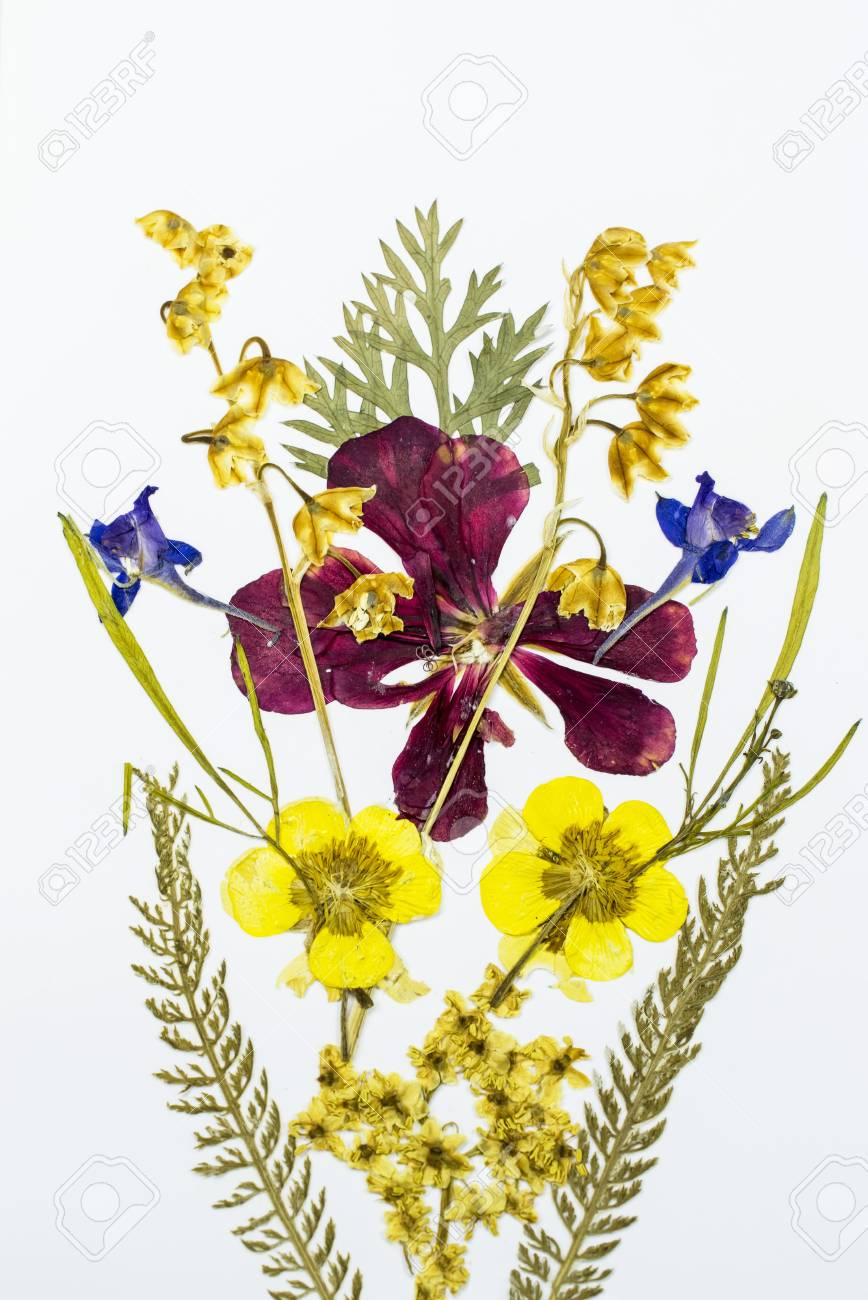 Pressed And Dried Flowers Bouquet With Different Species , On ...