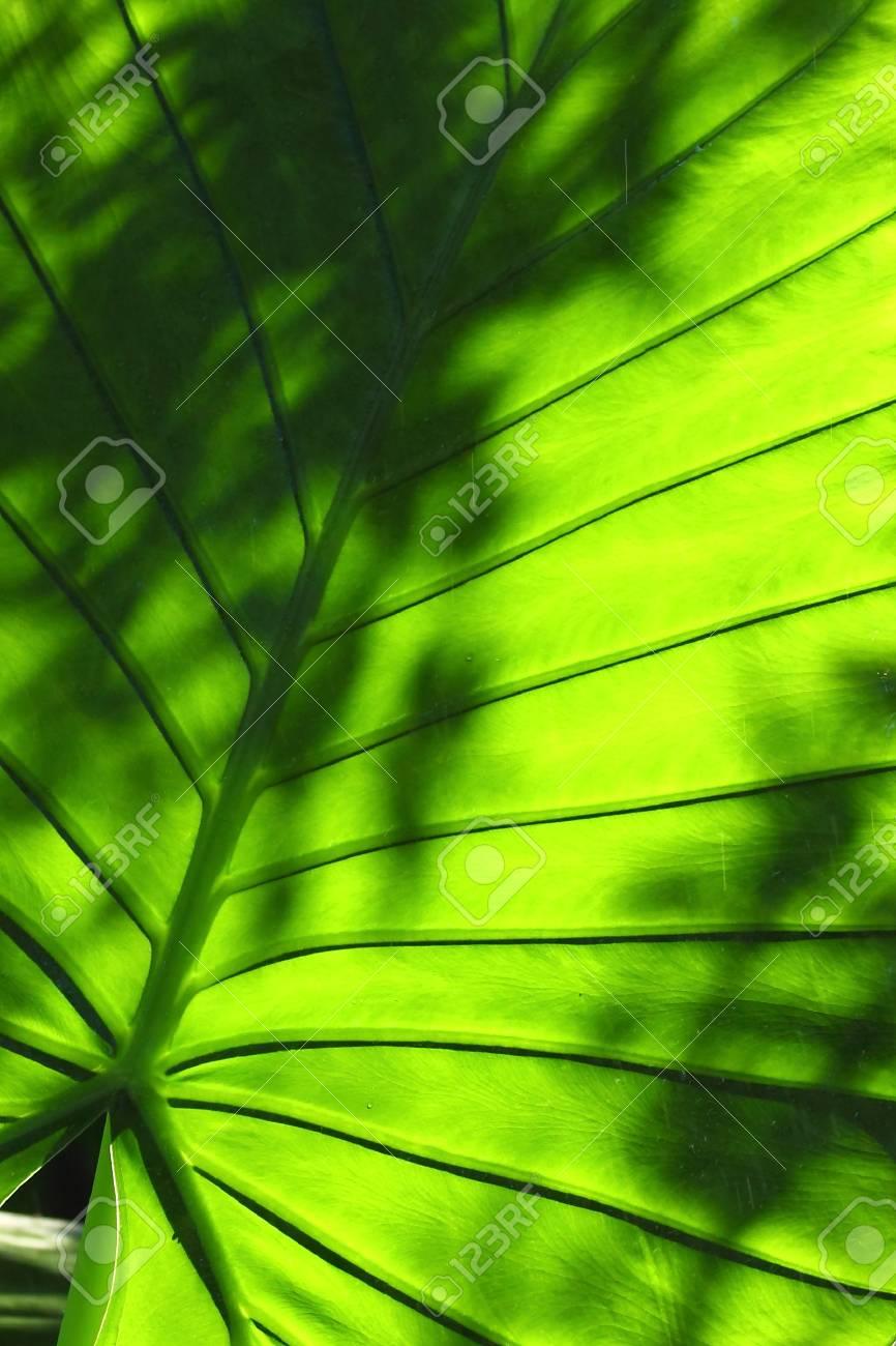 Green leaf Stock Photo - 7868461