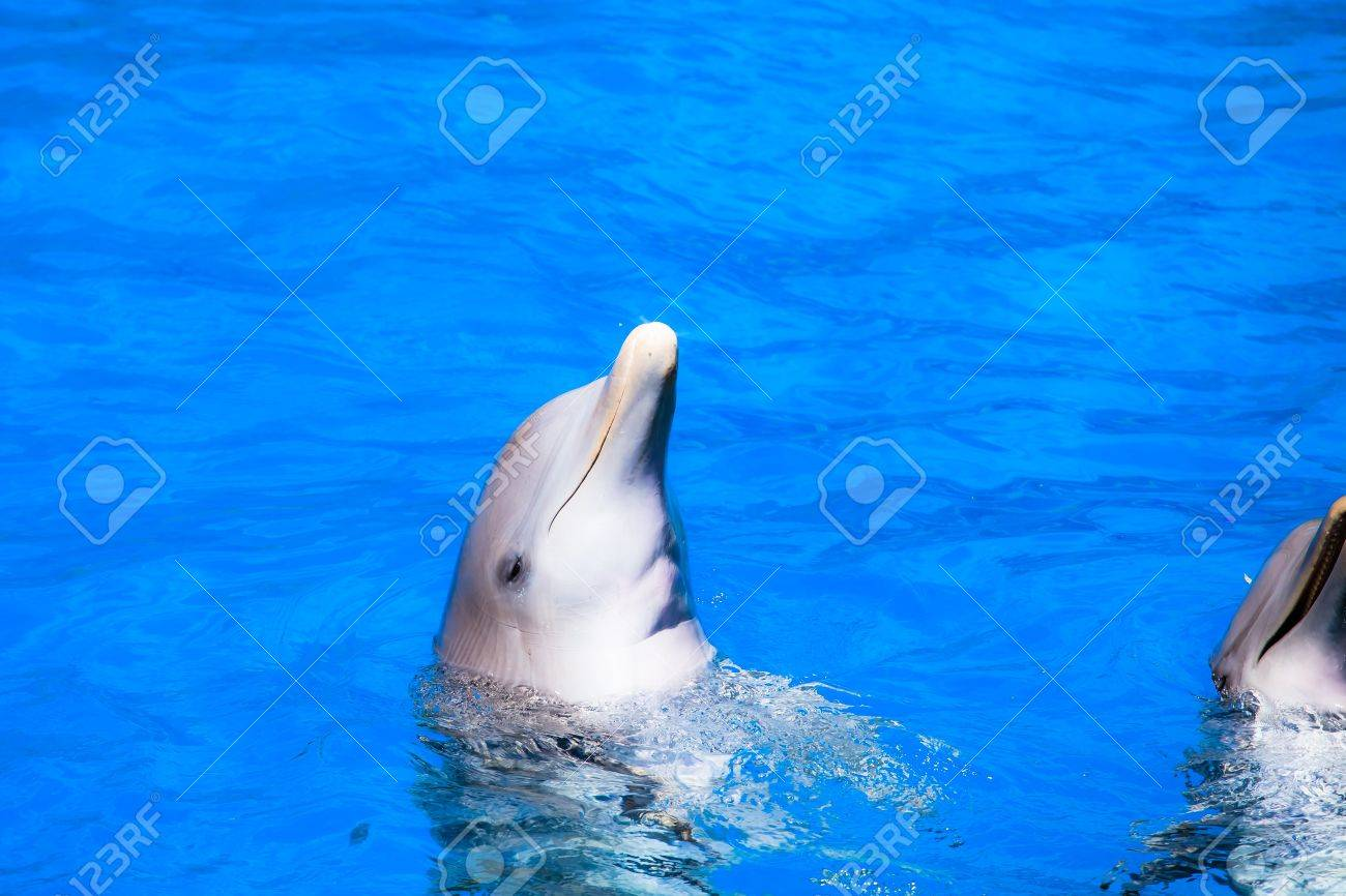 Dolphins swim in the pool ( HDR image ) Stock Photo - 17292749
