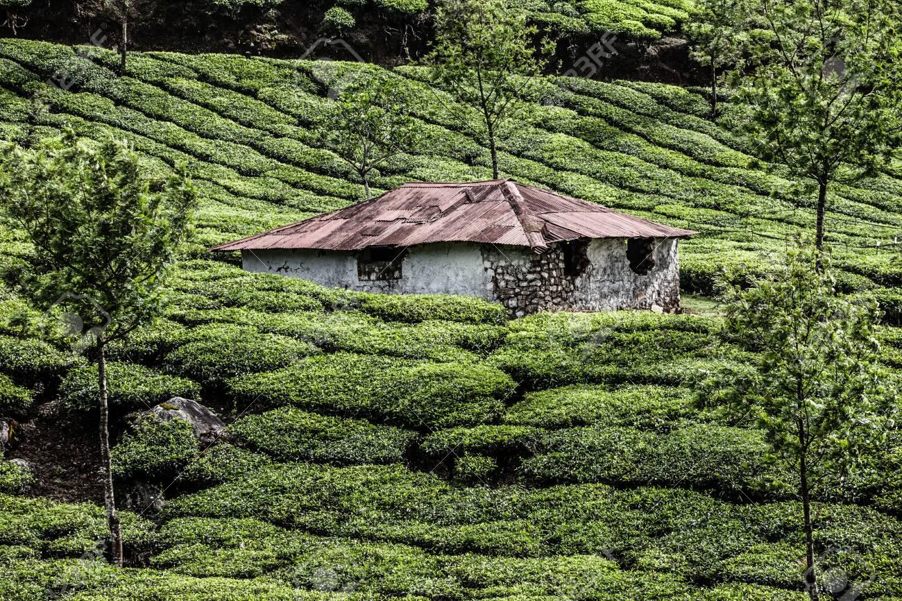 Tea plantation in Munnar, India ( HDR image ) Stock Photo - 17553007