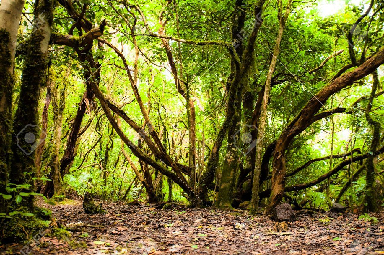 Rainforest in Garajonay National Park, La Gomera, Canary islands Stock Photo - 17608253