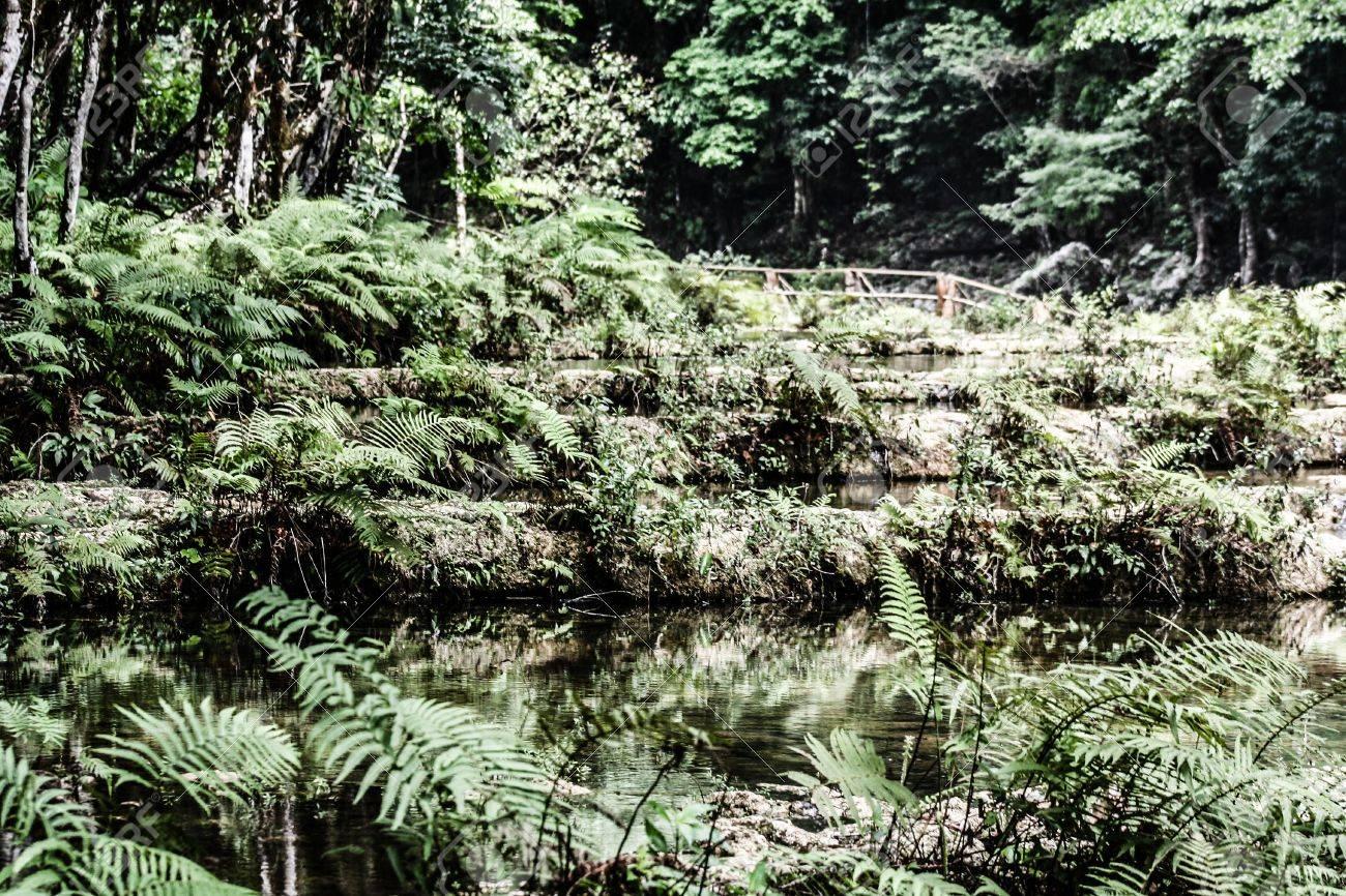 Semuc champey Guatemala paradise - 17650559