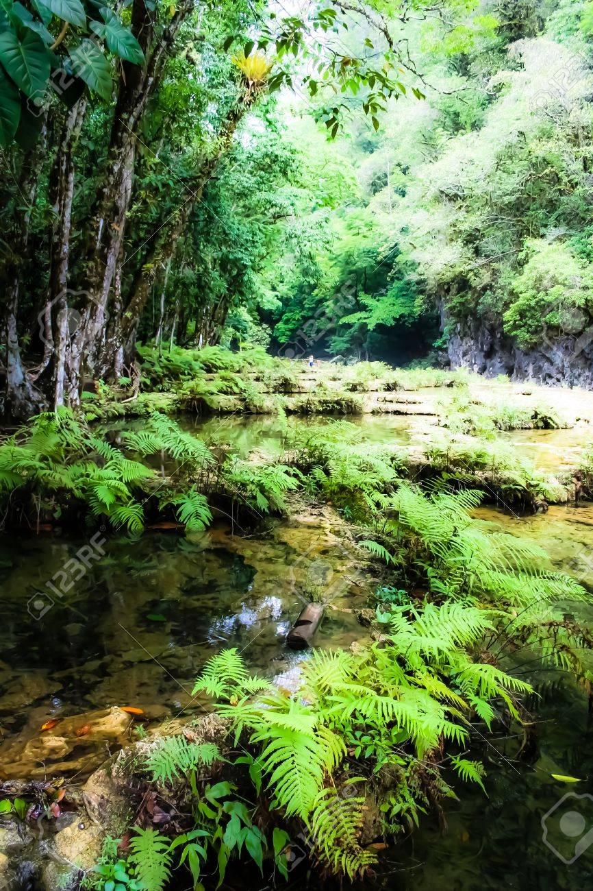 Semuc champey Guatemala paradise - 17650795