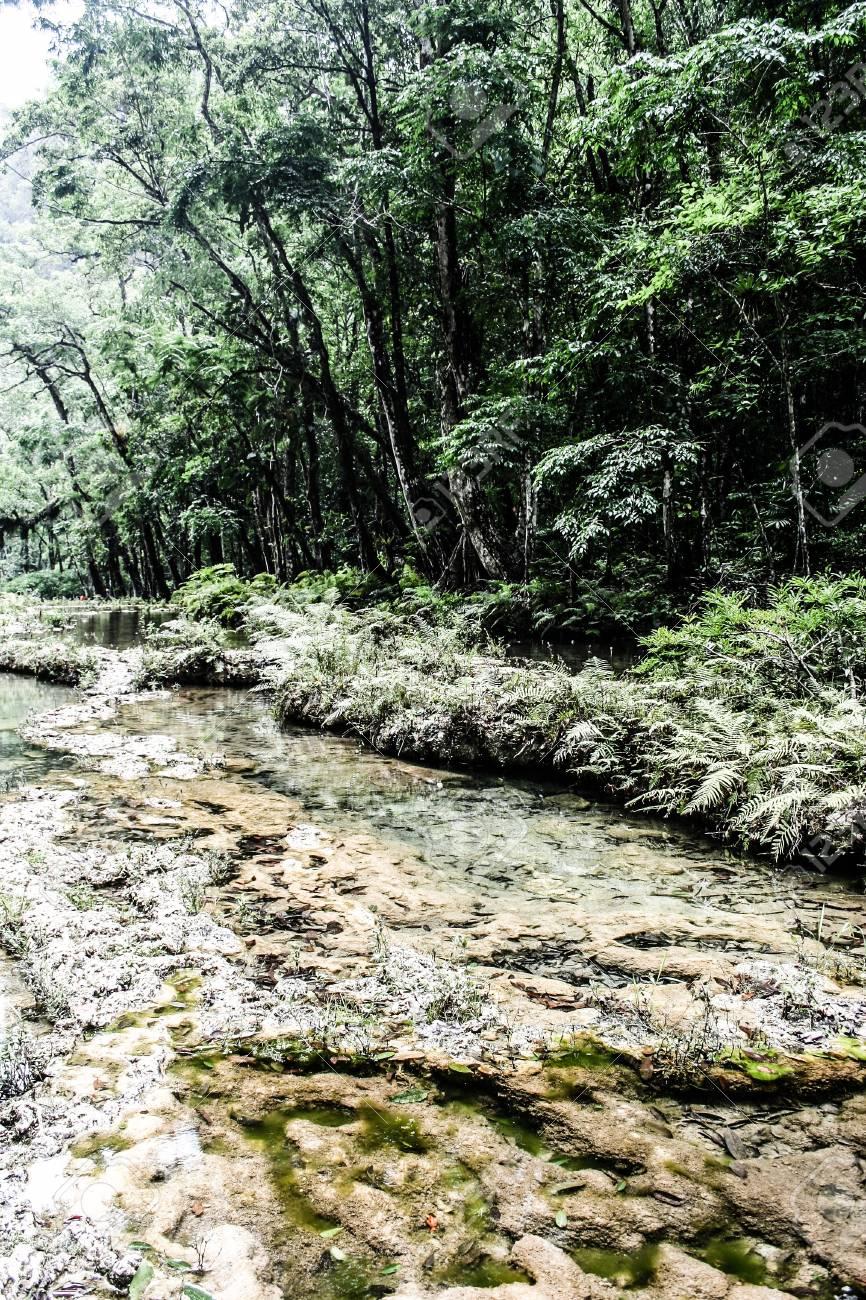 Semuc champey Guatemala paradise - 17652904