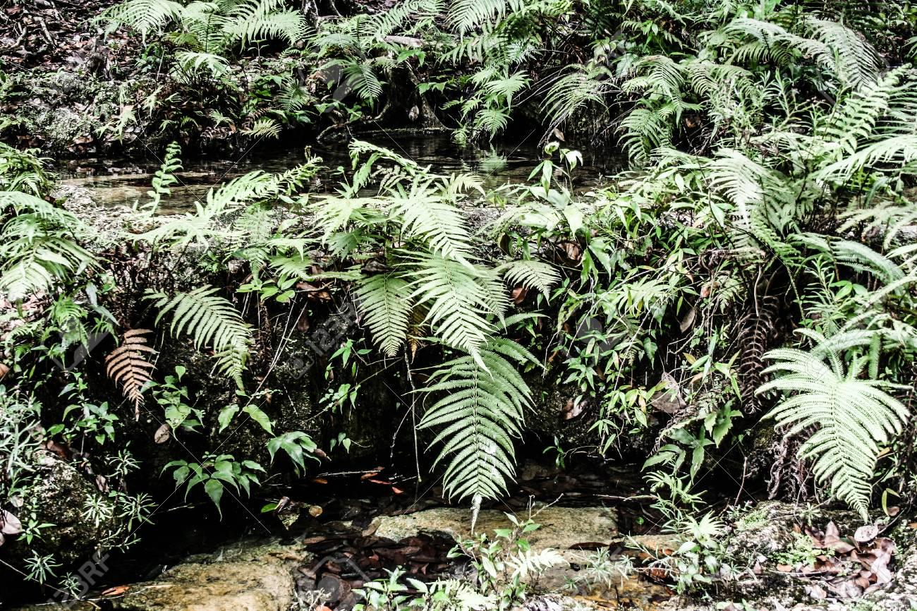 Semuc champey Guatemala paradise - 17652550