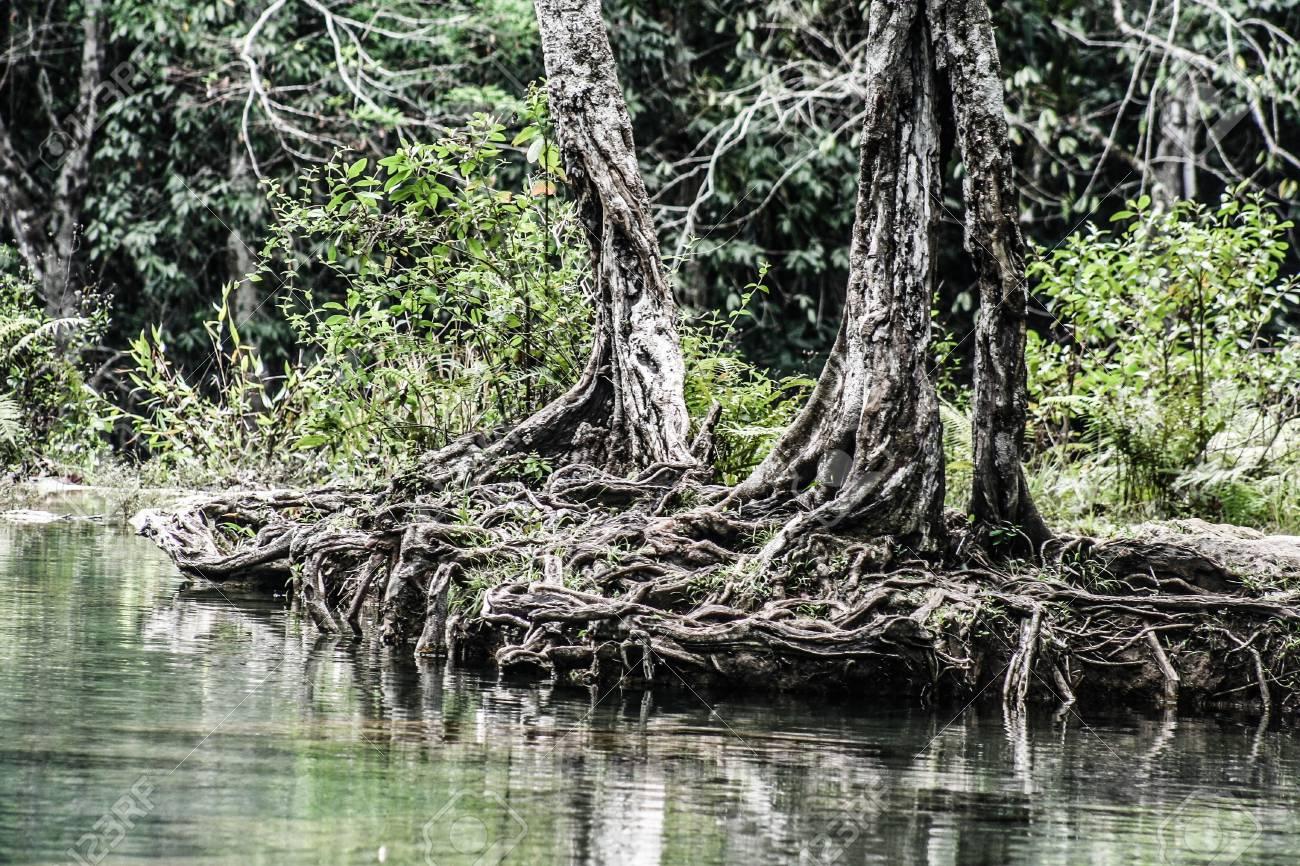 Semuc champey Guatemala paradise - 17650806