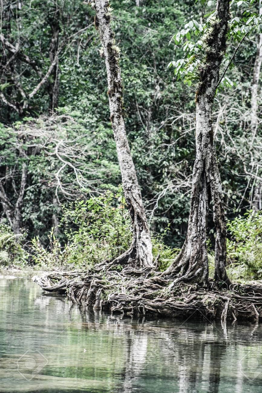 Semuc champey Guatemala paradise - 17650509