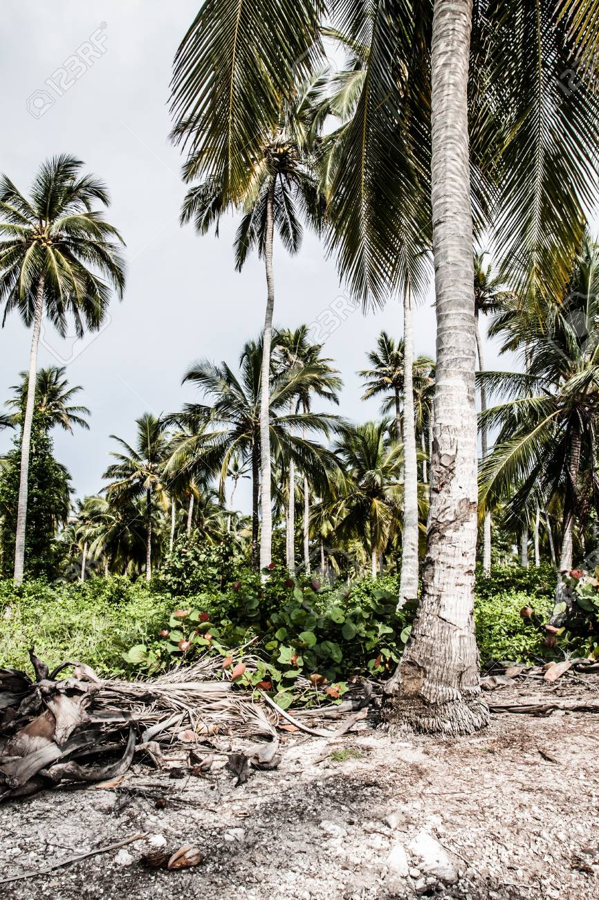 Green Palm Forest in Colombian Island ( HDR image ) Stock Photo - 17717504