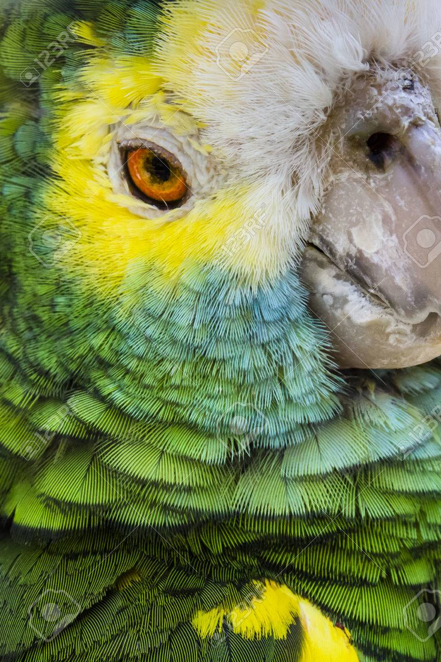 Green bird plumage, Harlequin Macaw feathers, nature texture background - 42046707