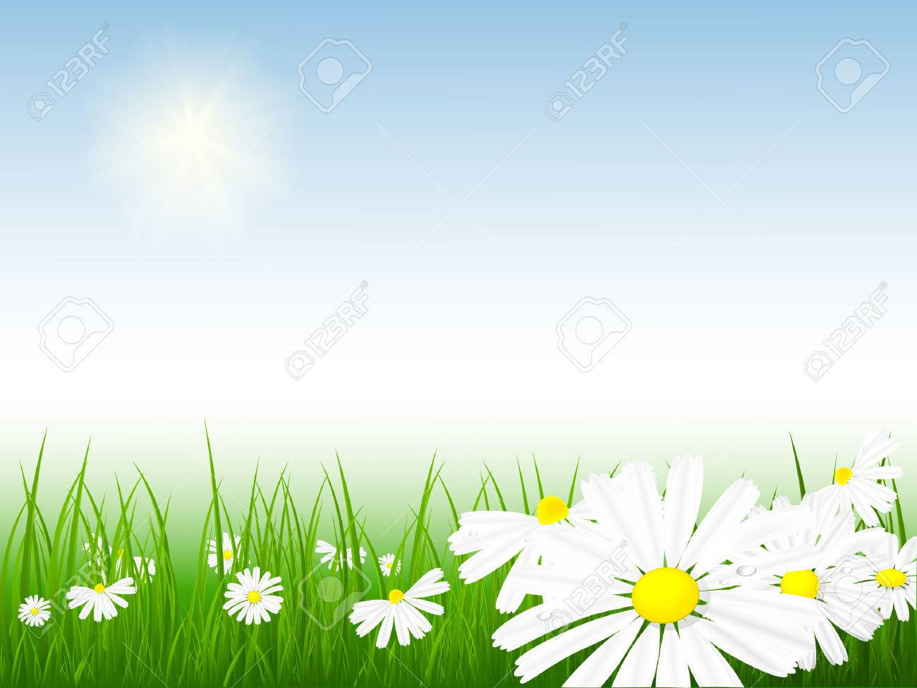 bright vector summer scene with chamomiles and grass Stock Vector - 4395742