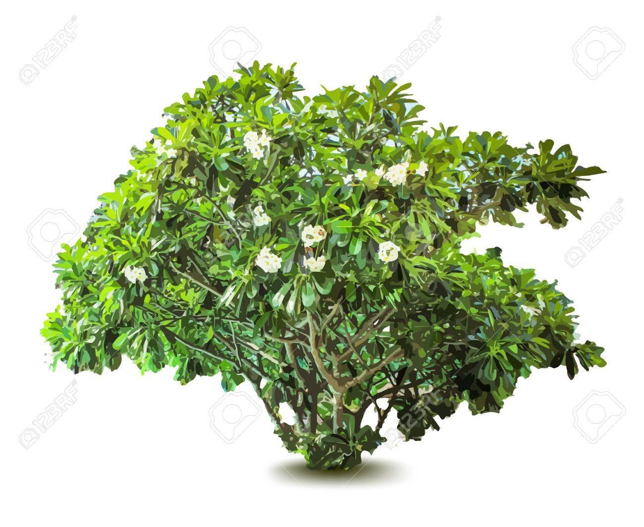 plante à fleurs et les feuilles. arbre décoratif. vecteur clip art