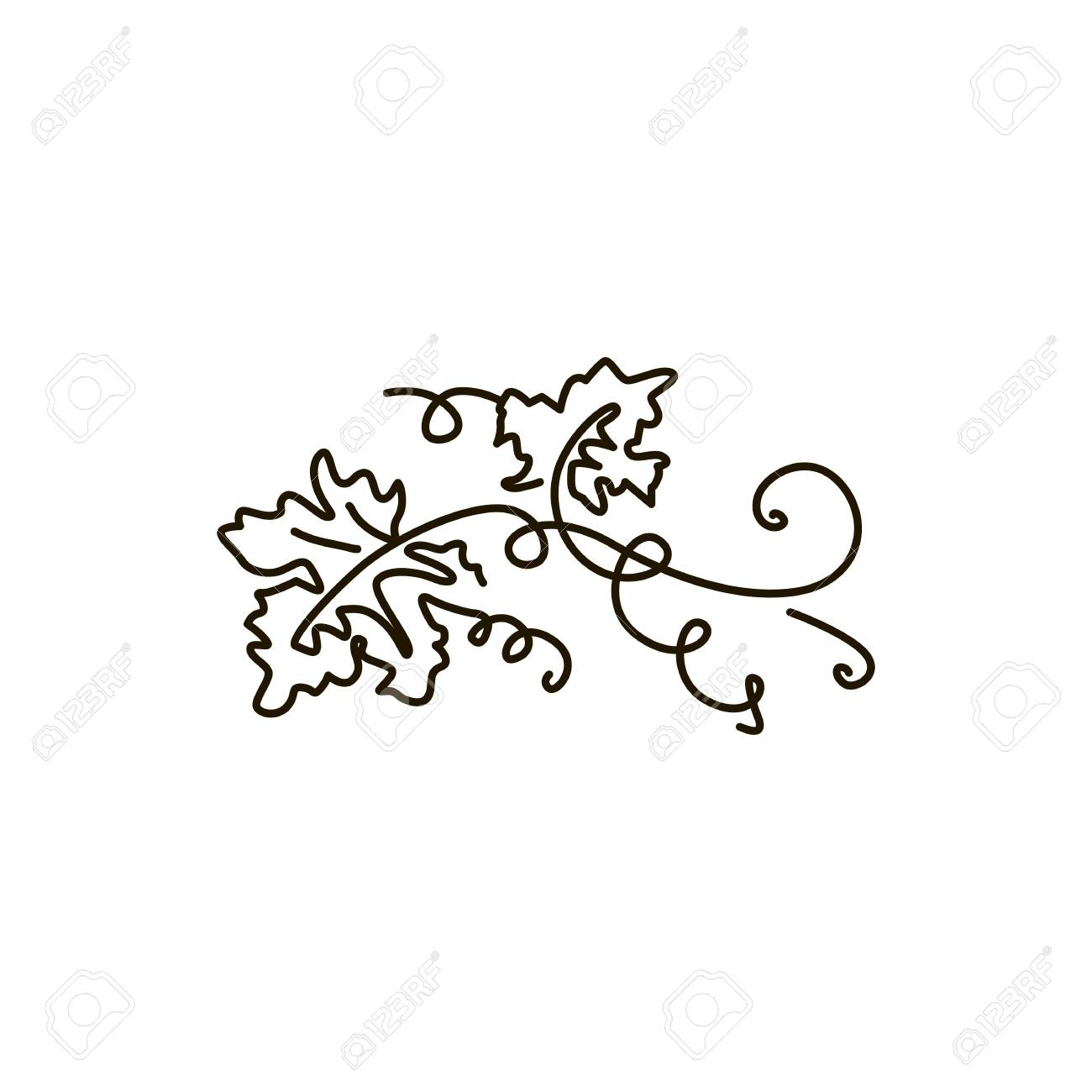 Vector Line Icon Grape Leaves One Line Drawing Isolated On Royalty Free Cliparts Vectors And Stock Illustration Image 115457533