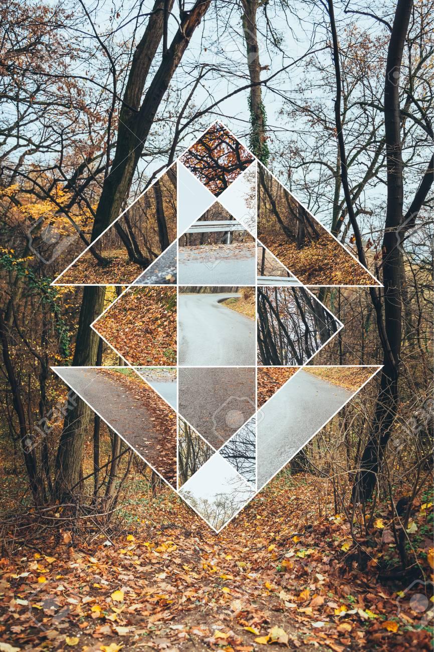 Image result for sacred autumn forest