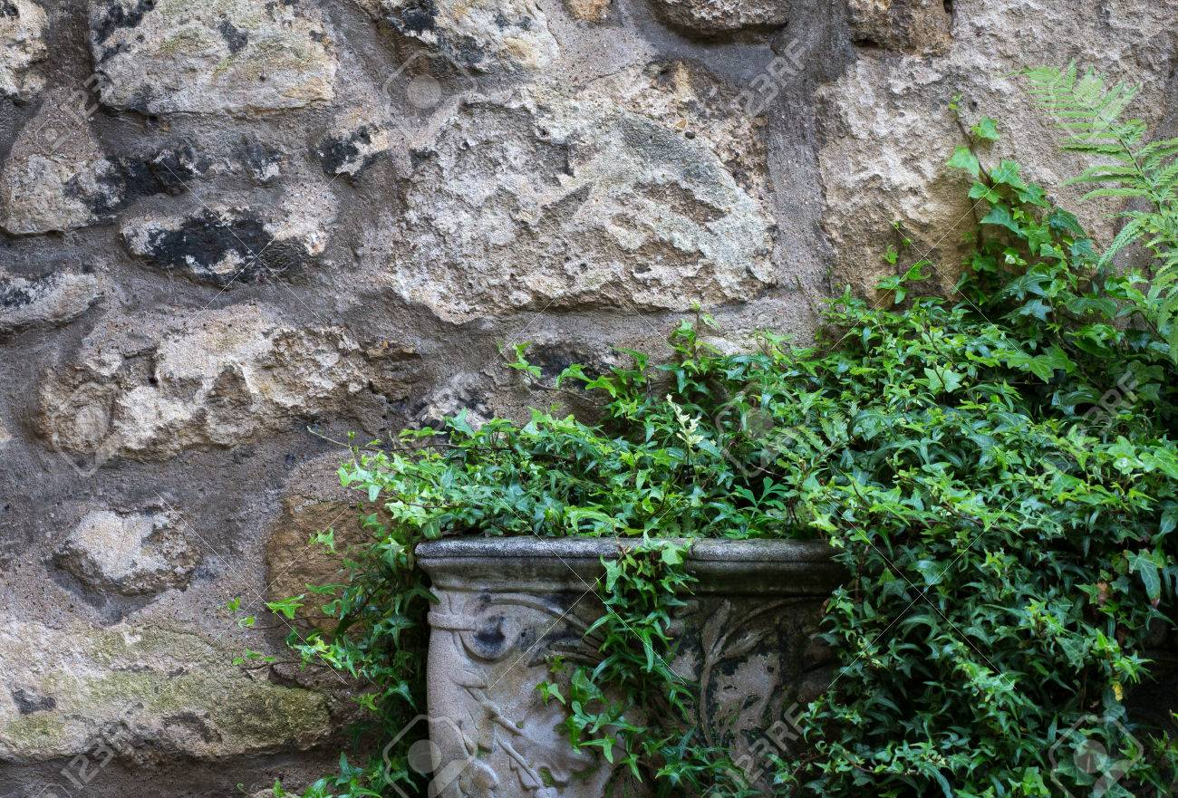 Stone Decorative Garden Pot With Green Plants Against Old Wall Stock ...