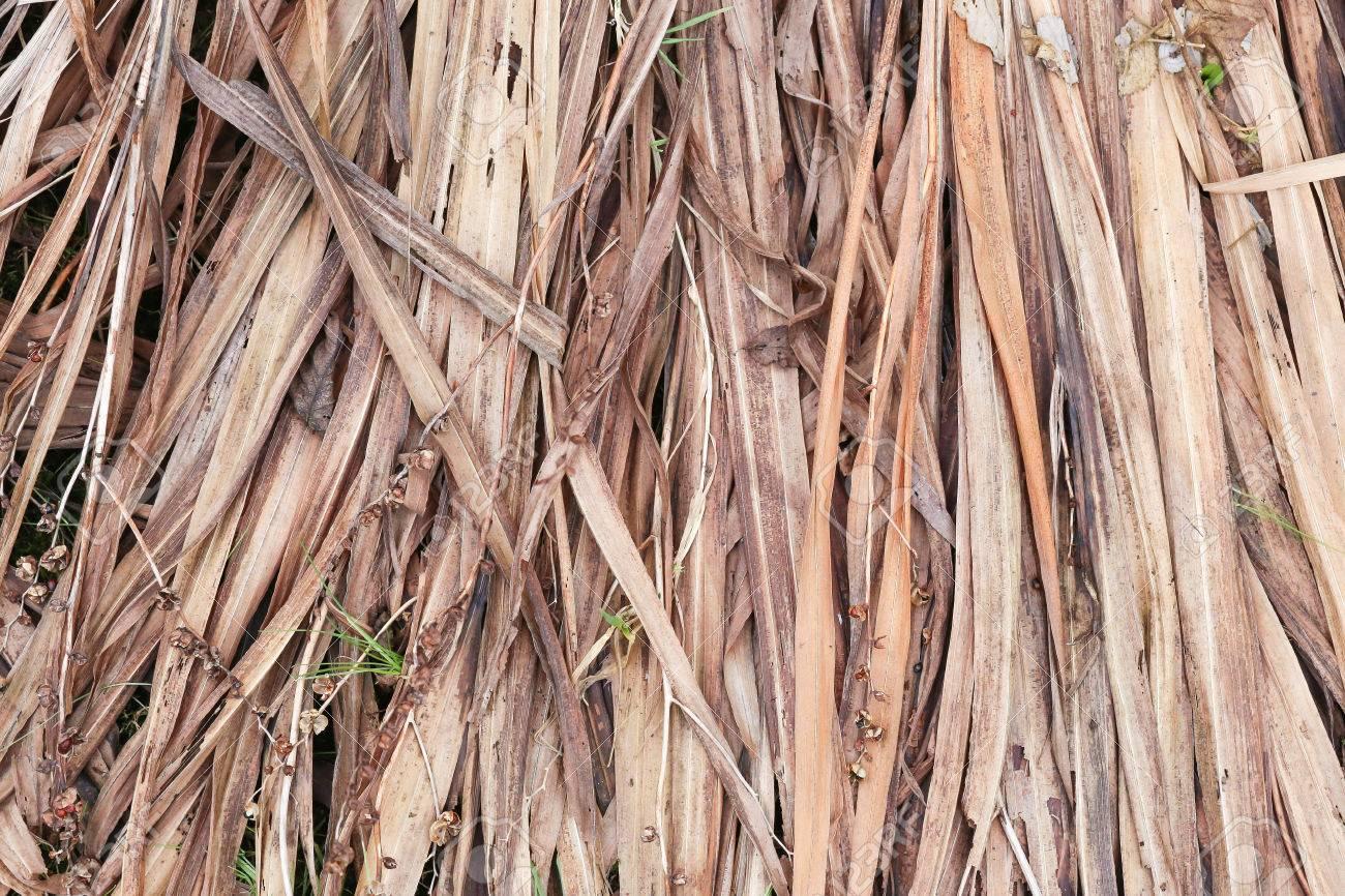 Compost De Feuilles D Érable feuilles mortes de crocosmia et graines sèches en hiver pour le compostage,  fond froid glacial