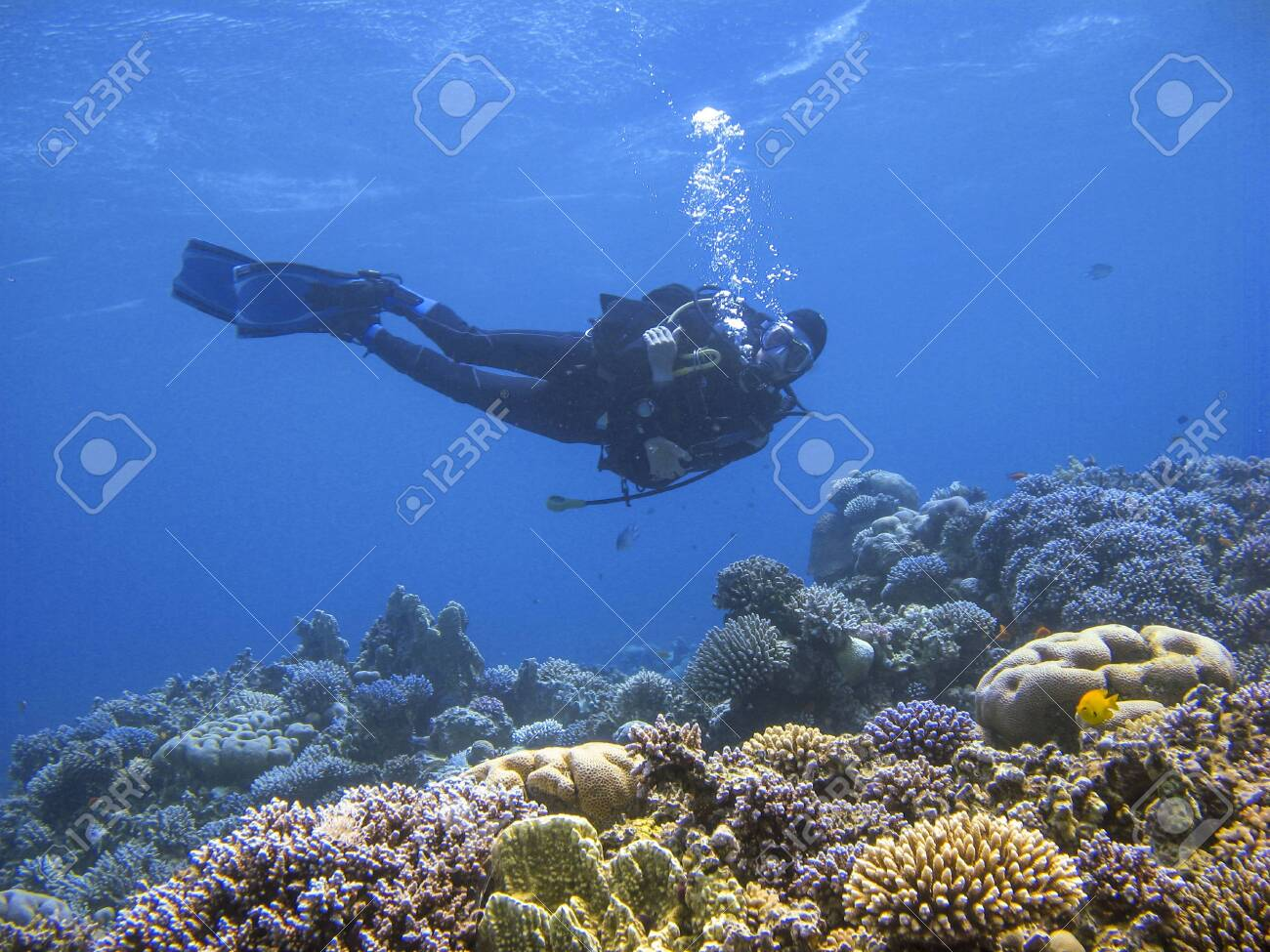 Underwater photography of a scuba diver swimming above the coral reef at dive site Ras Abu Galum in Dahab, Egypt. - 124329146