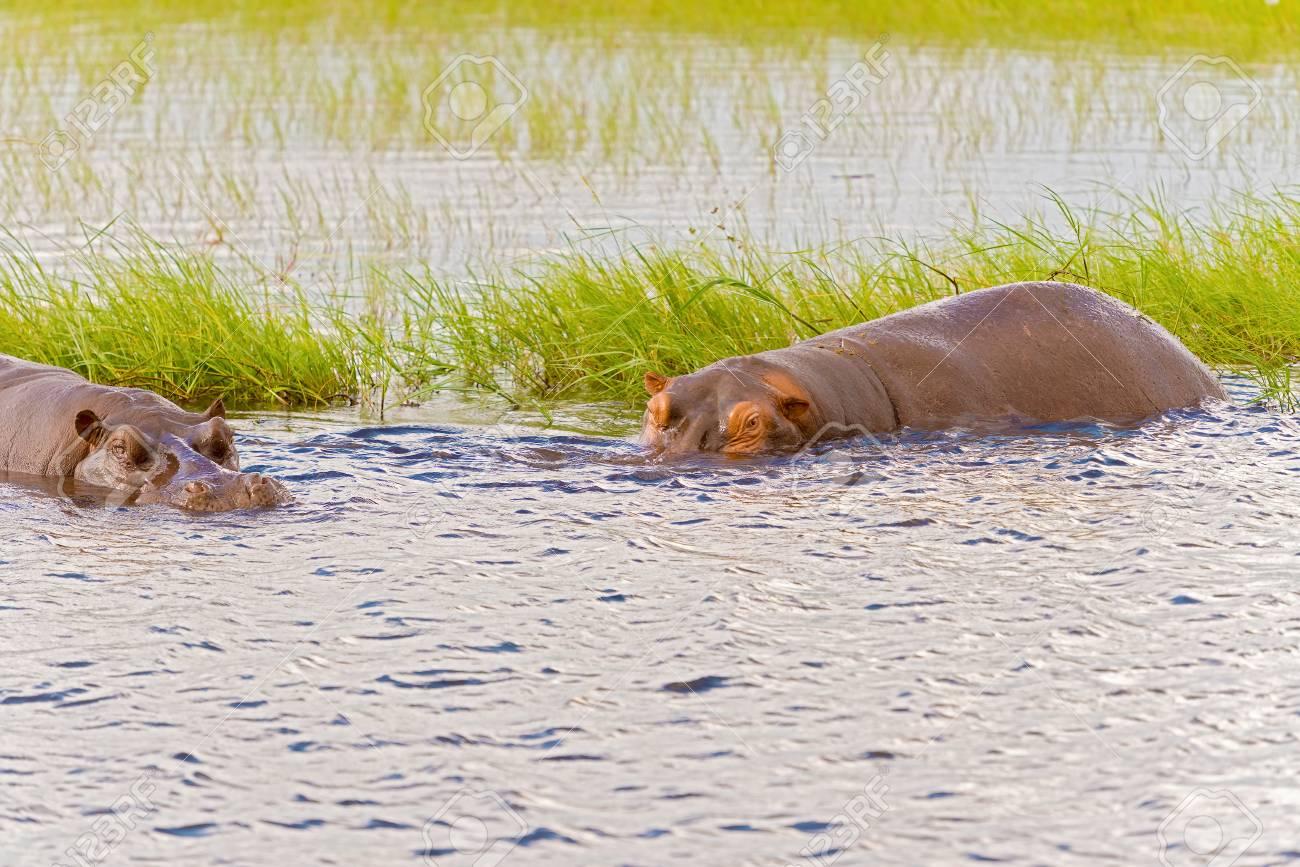 rencontres Botswana