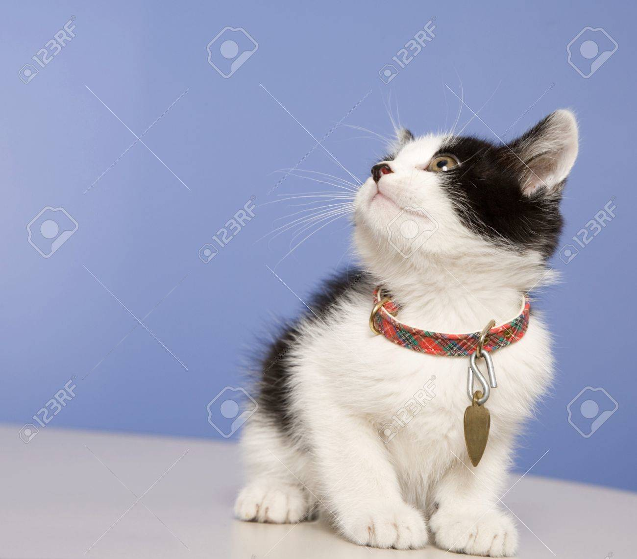 Young kitten in a foster program until he's old enough for adoption.  About 5-6 weeks old here. Stock Photo - 8032552