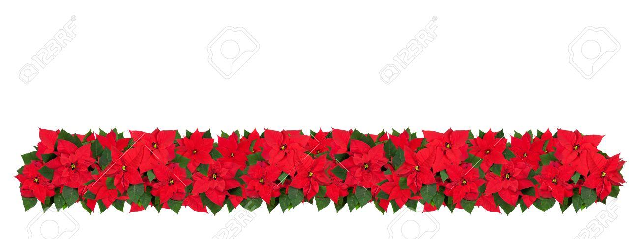 horizontal christmas border of poinsettia flowers. large size, Beautiful flower