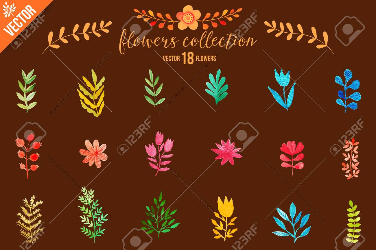 Conjunto De Flores De Colores. Hojas. Vector Illustration.vector ...