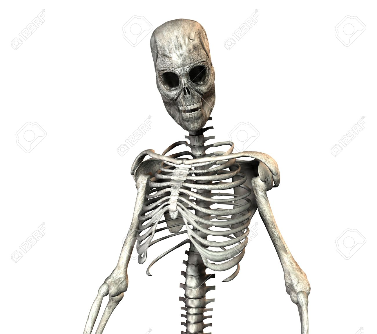 A Illustration Of A Skeleton On A White Background Stock Photo ...