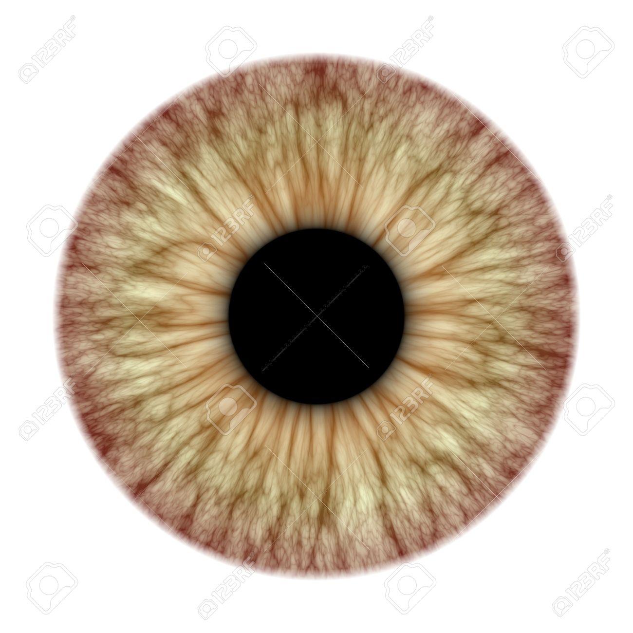 Iris eye diagram more information djekova anatomy iris an illustration iris eye diagram pooptronica Choice Image