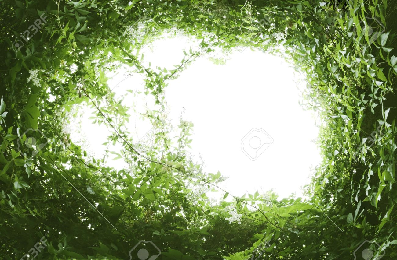 An image of a natural green leaf frame Stock Photo - 7340953