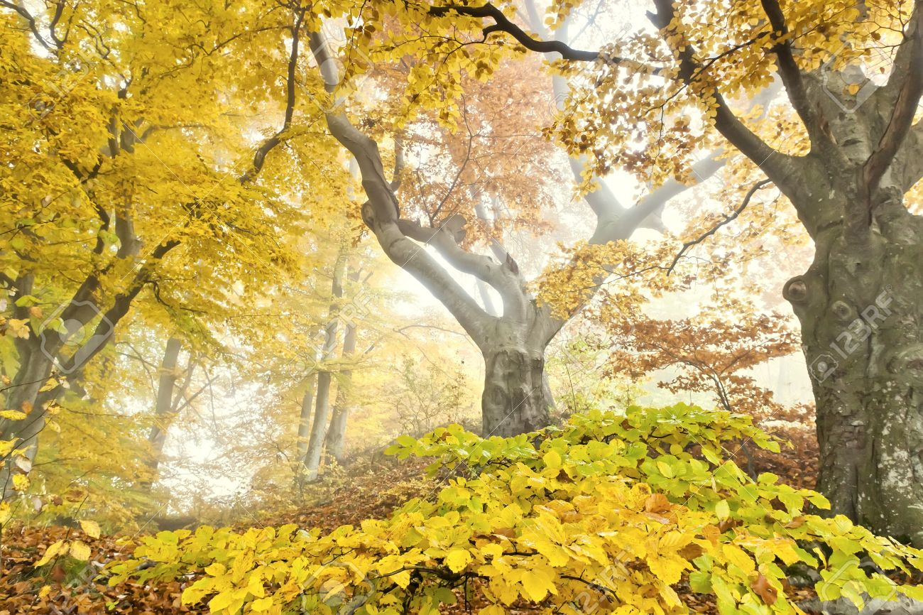 An image of a beautiful yellow autumn forest Stock Photo - 11088789