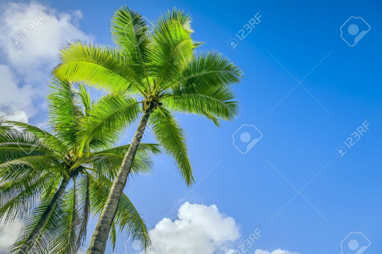 An image of two nice palm trees in the blue sunny sky Stock Photo - 15993182
