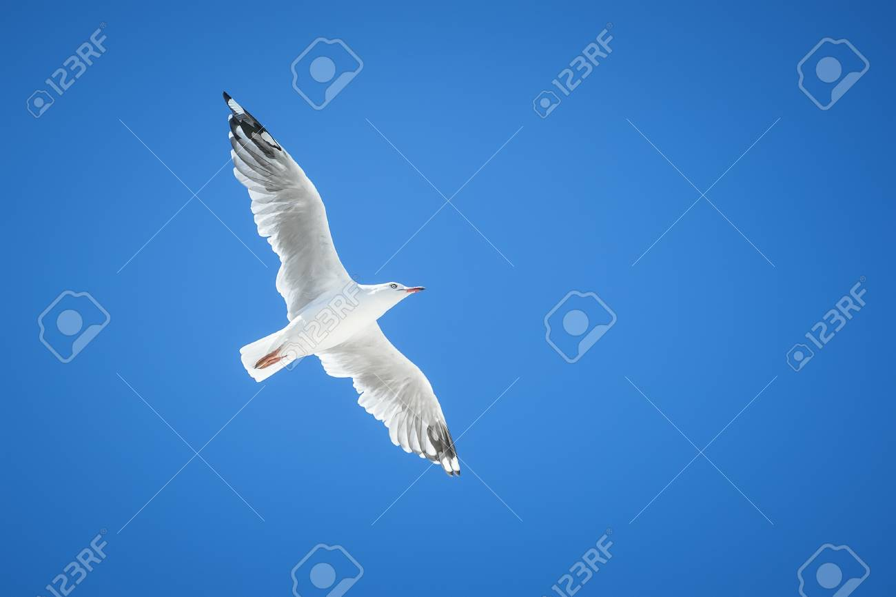 An image of a beautiful seagull in the bright blue sky Stock Photo - 17354083