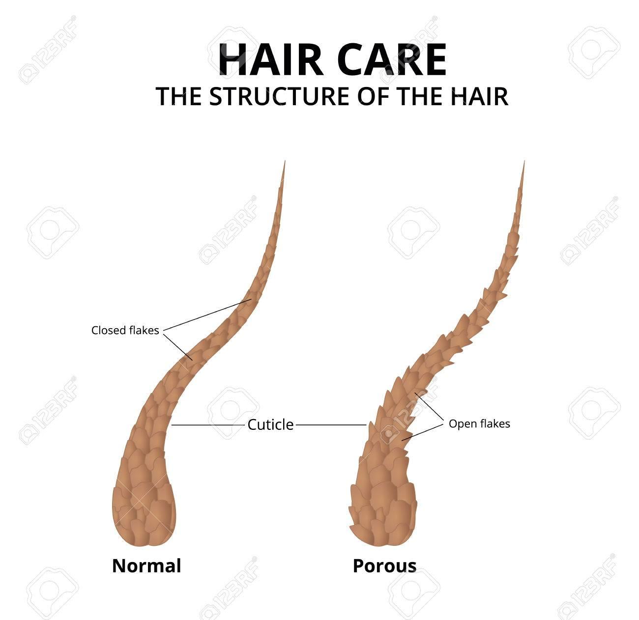 Cuticle of hair close-up - 80975015
