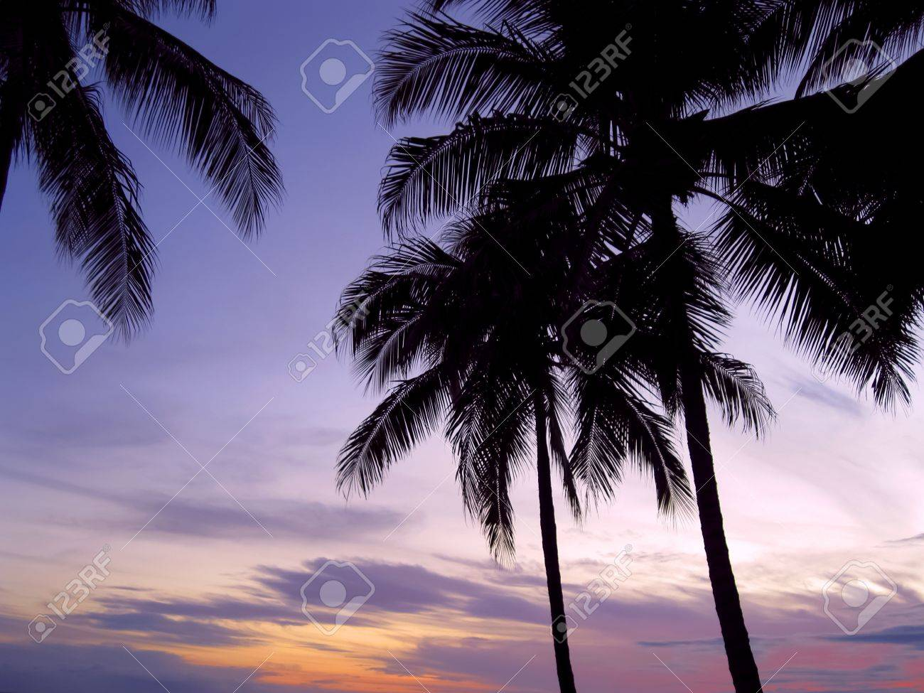 Palm trees in back light during bright sunset Stock Photo - 11345362