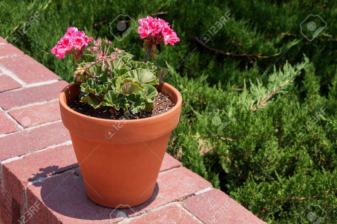Horizontal Shot Of A Flower Pot With Pink Storksbills On A Wall