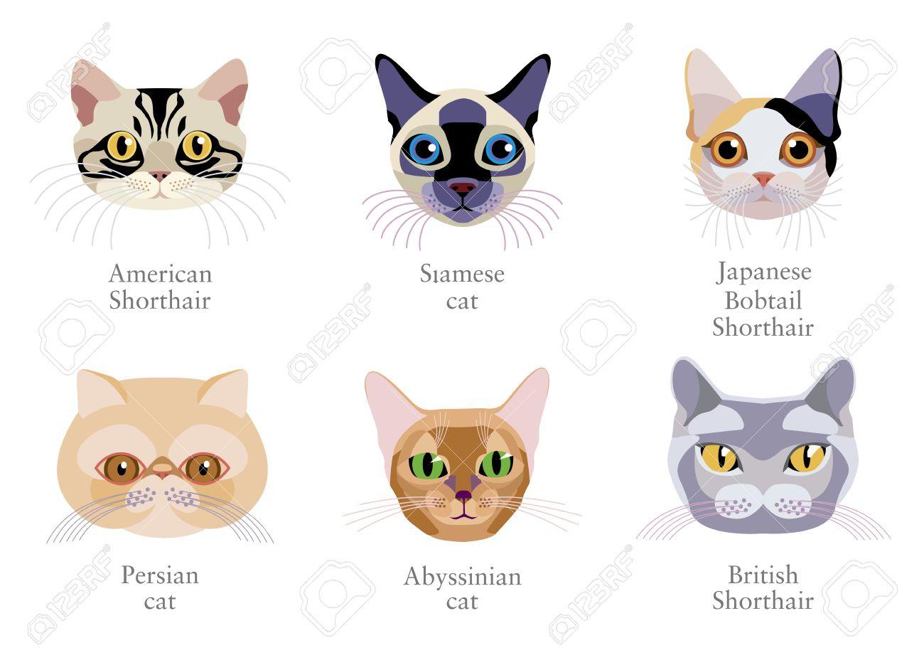 猫の別の品種 ペルシャ猫日本アメショーシャムアメリカンショート