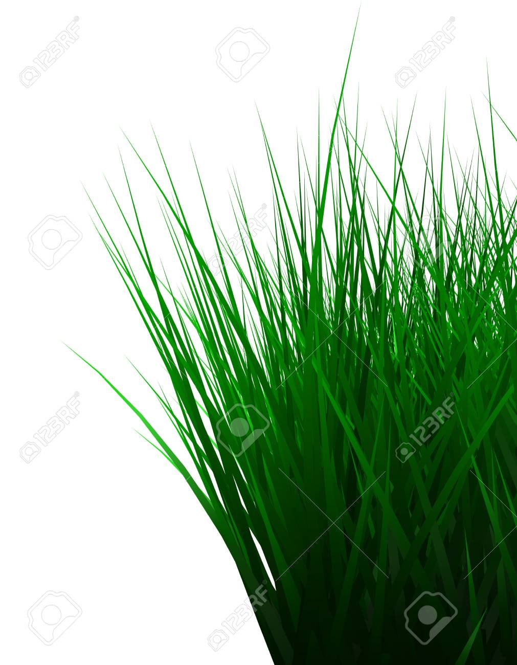 Green color grass illustration isolated on white Stock Illustration - 10652488