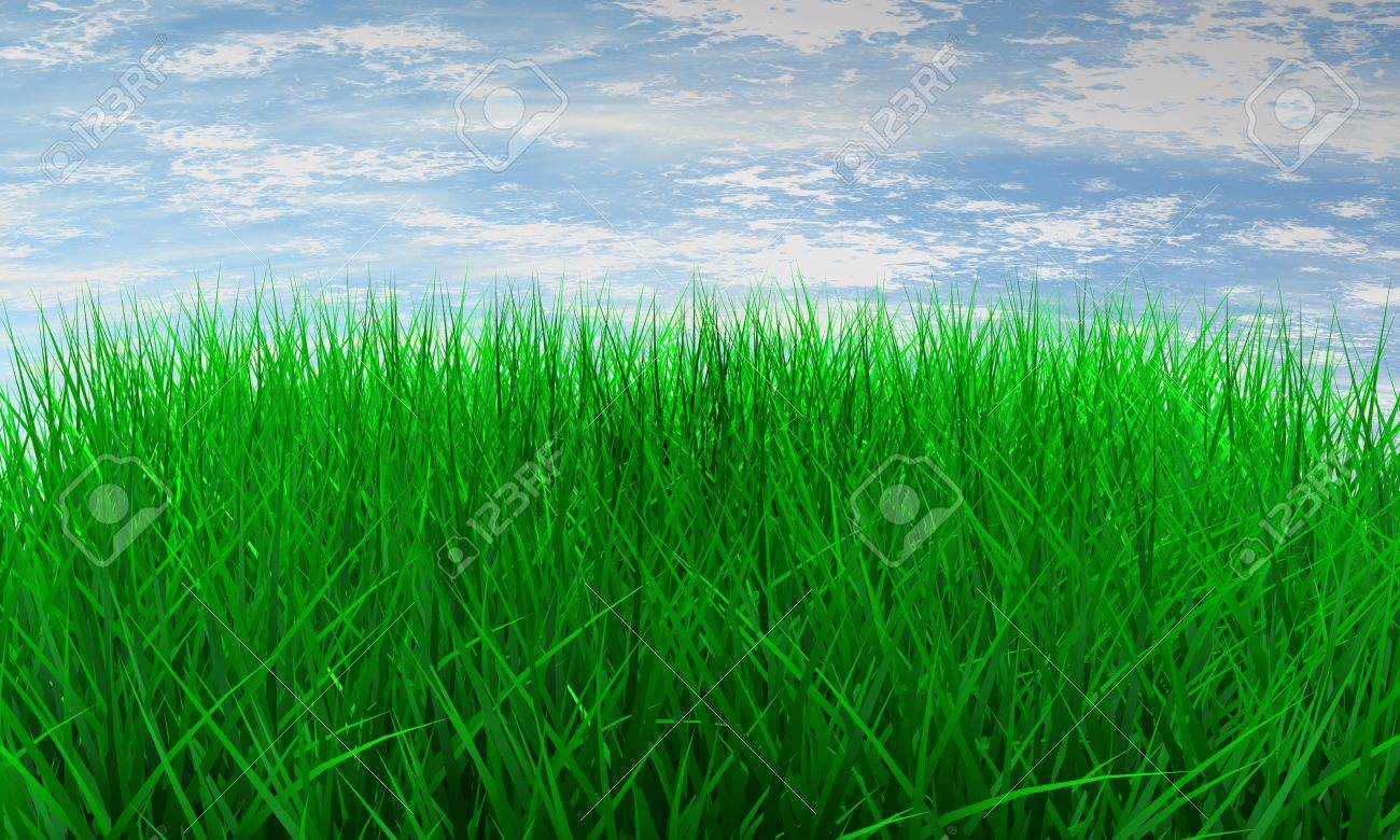 Green color grass illustration on blue sky Stock Illustration - 10652487