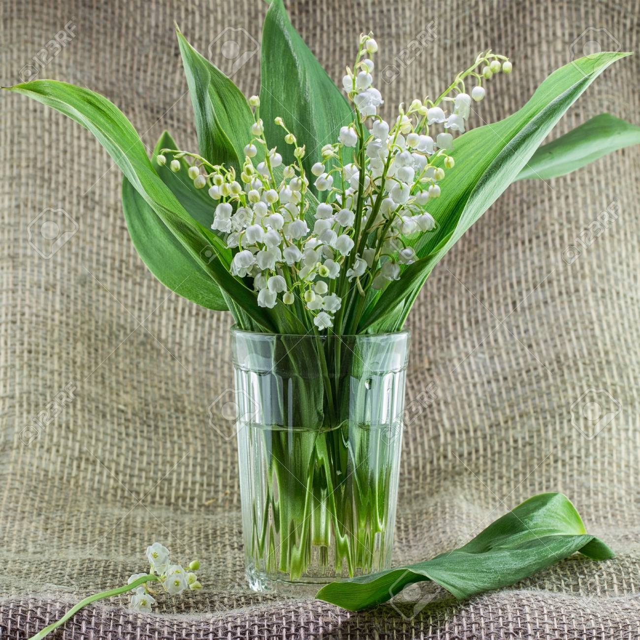 A Bouquet Of Lilies Of The Valley In A Simple Glass Vase On A.. Stock  Photo, Picture And Royalty Free Image. Image 101581294.