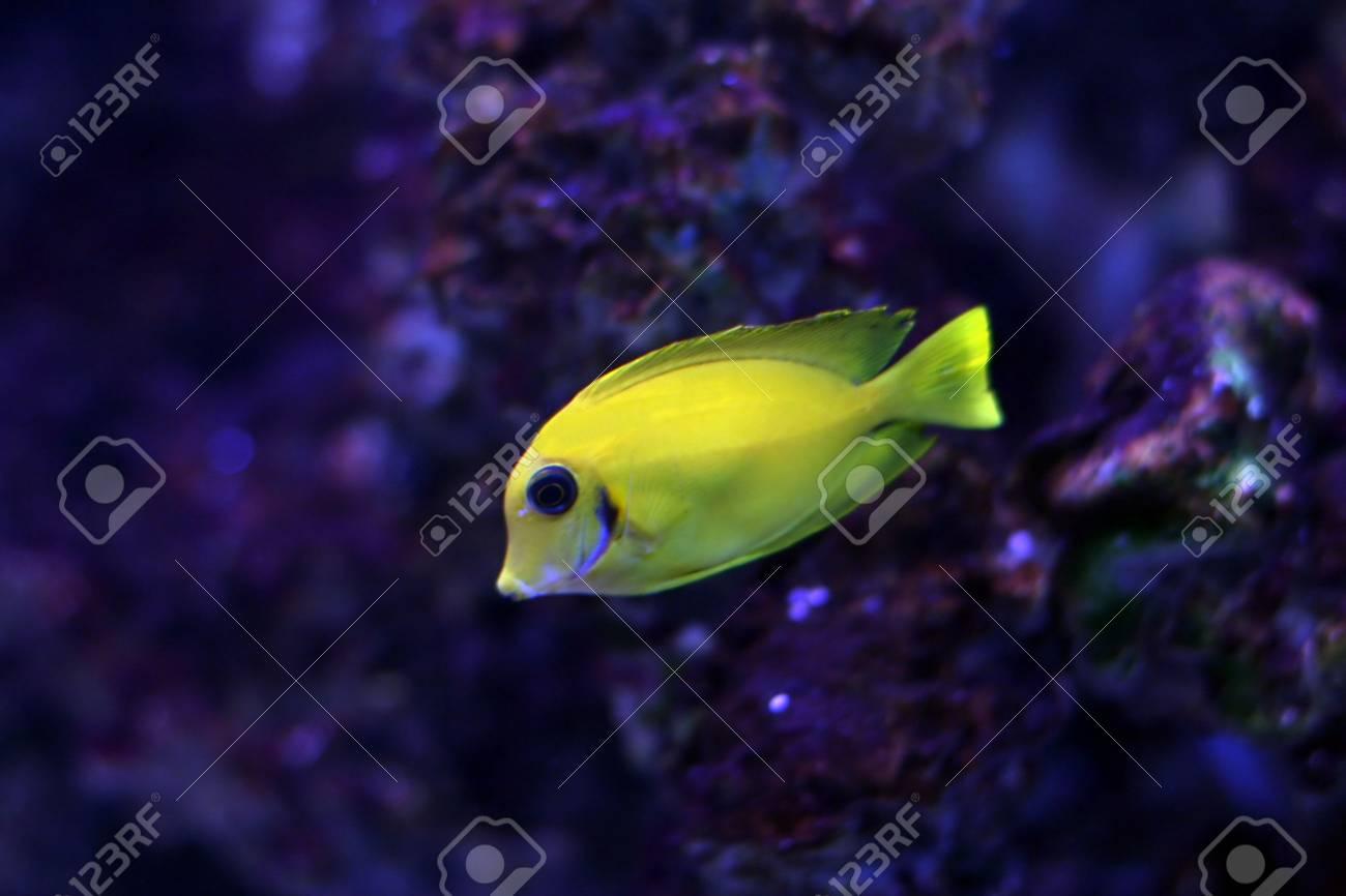 Tropical fish №12 Stock Photo - 1063621
