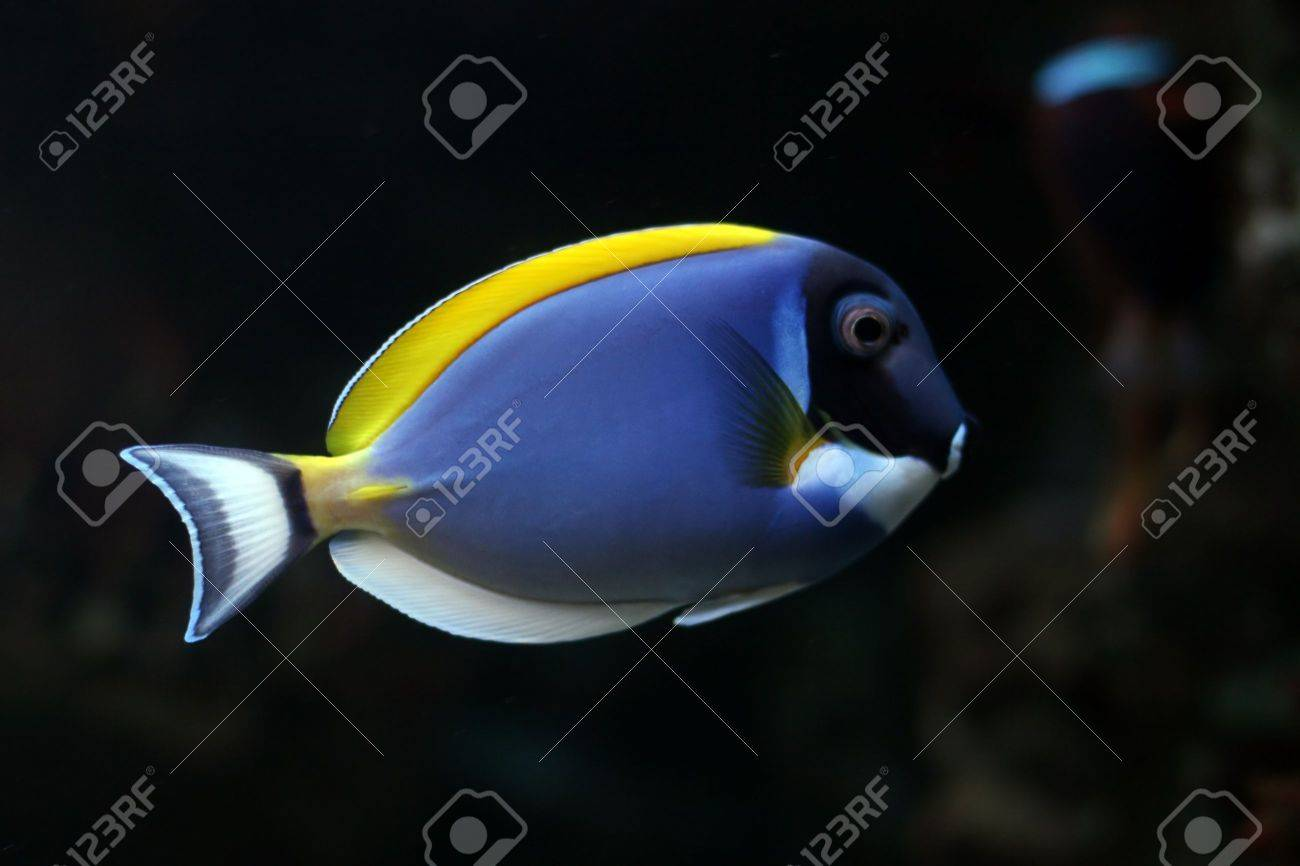 tropical fish № 46 Stock Photo - 1118491