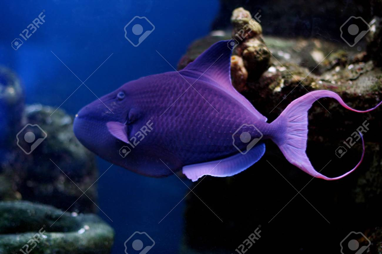 tropical fish № 47 Stock Photo - 1118492