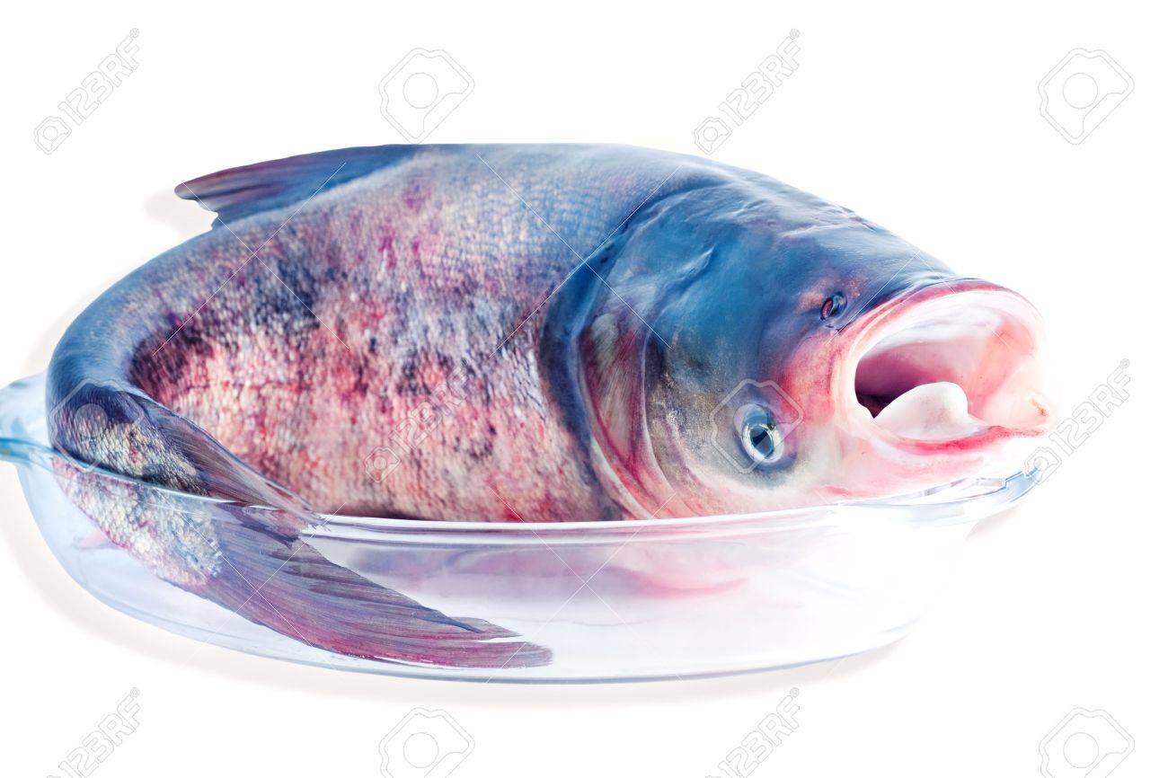 bollitore o pesce datazione