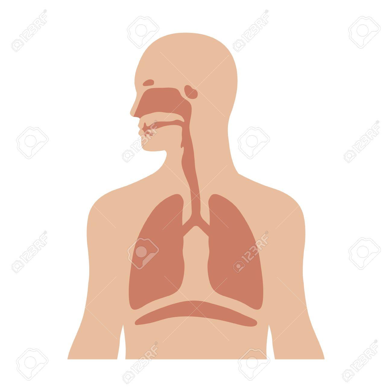 Menschliche Biologische Atmungssystem Flach Farbe Symbol Für ...