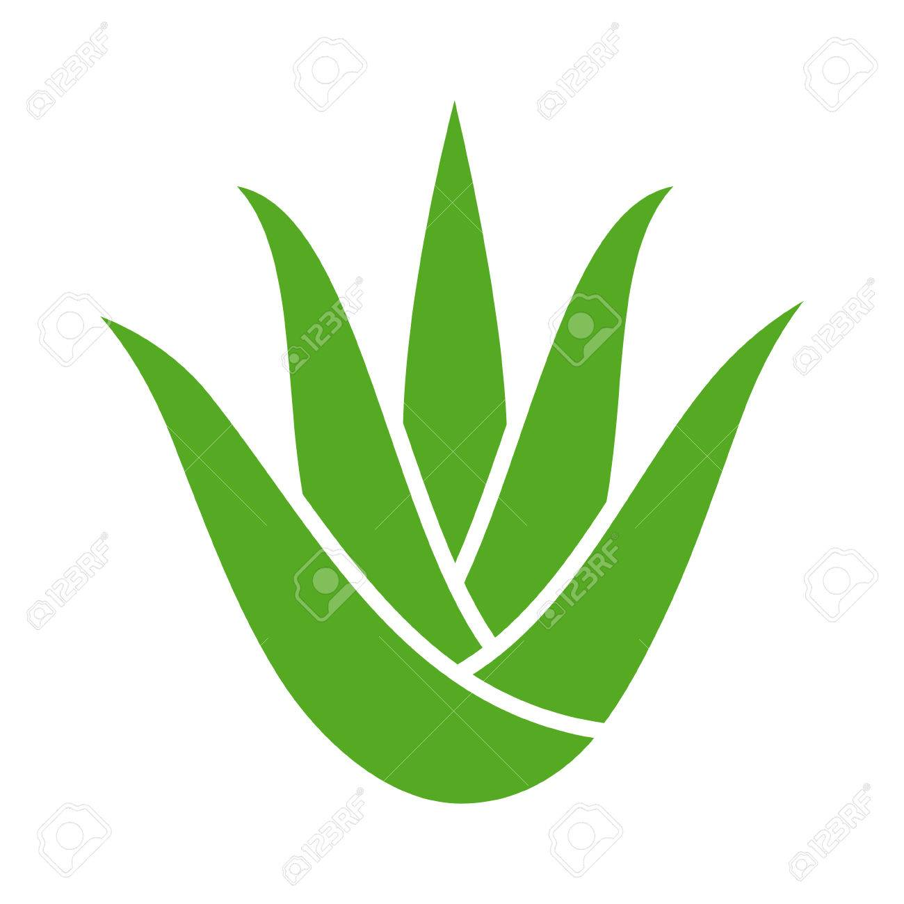 Green aloe vera plant with leaves flat color icon for apps and websites - 66078507