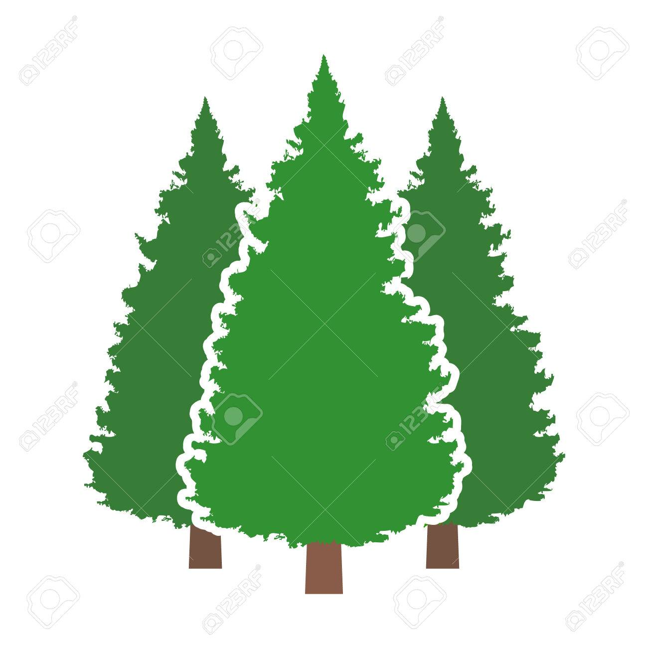 Three Conifer Pine Trees In A Forest Or Park Flat Vector Color ...