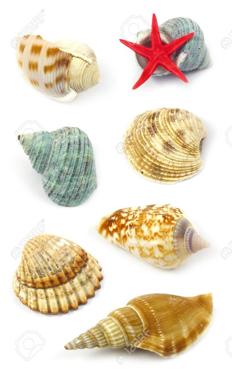sea shells collection Stock Photo - 4371210