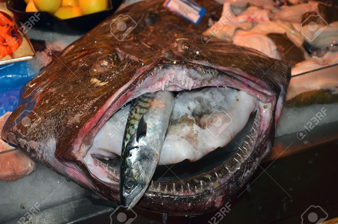 Hässlicher fisch